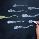 Spermauntersuchung (Spermiogramm)